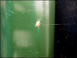 The Spider Web. by TeeTeeGraphics