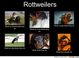 Rottweilers: Perceptions Versus Reality by Smileysun7