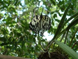 butterfly-2 by dproberts