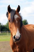 Yearling_Portrait by cavallostock