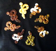 Painted Ball Pythons by DragonCid