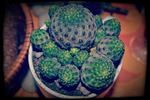 Luck Cactus by FranticMezmer