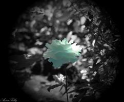 Little prince's rose by AnnaFelly