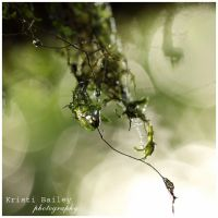 Natures Tears by FromSleepyHollow