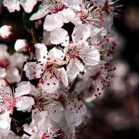 Clusters of White by Frenchtown