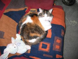 Angel teh Kitty numba 2 by cat-lovers