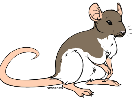 Yuno my rat by atilfunami