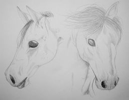 Horse Portrait Practice by carrie-warwick