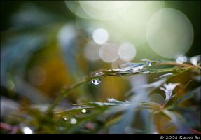 Japanese Maple Rain IA by butterfly36rs