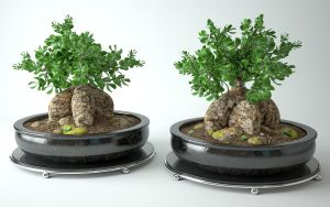 Model 3d : Bonsai tree by MarcinG1