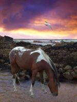 Graphic - Horse and Water by AEC101