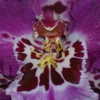 Abstract Flower Macro by Larah88