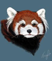 Red Panda by skyehopper