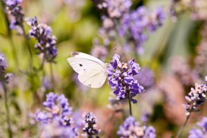 White and Purple by braindrainphotos