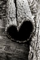 Tree Love by Dom410
