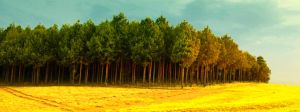 Swazi forest sunset by ElSpaZo
