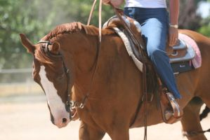 Chestnut AQHA Quarter Horse Champion by HorseStockPhotos