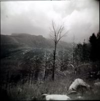 Holga 101 by xxlogre