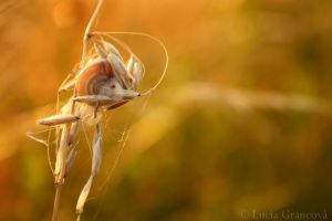 Charlotte web by LuciaG