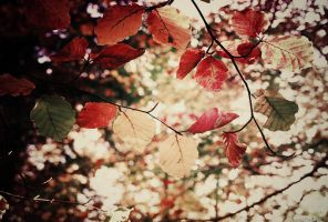 Autumn Wallpaper by vanerich