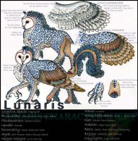 Lunaris the Hippogriff by layra