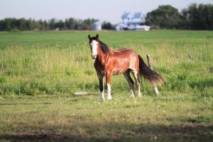 Clydesdales 6 by okbrightstar-stock