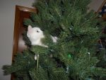 Kitten in a Christmas Tree 2 by ulyferal