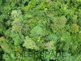 Jungle from the sky by Tylerspade