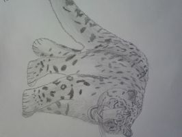 Sketched snow leopard 3 by SomethingWild7