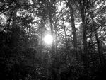 The Sun Through the Trees. by ArtsyAshley23