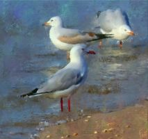 Seagulls by fmr0