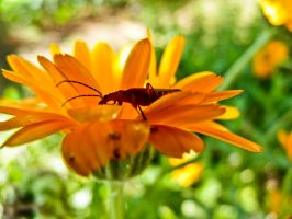 Animal and Flower by Sonia-Rebelo