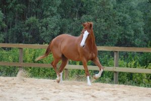ASH trot sdie on head to the s by Chunga-Stock