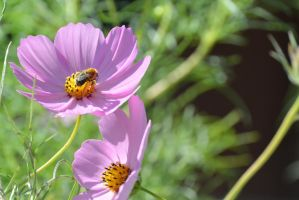 Little Pollen Packer, Bee Searching for Nectar 7 by Miss-Tbones