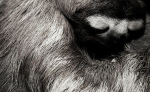 sloth. by kukuk-photo
