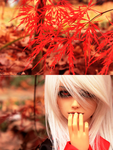 seasons reflected by the-grinning-fox