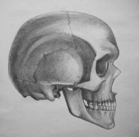 skull 2 by Gh0st-0f-Me