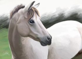 White Horse - painting by Griffin-Fire