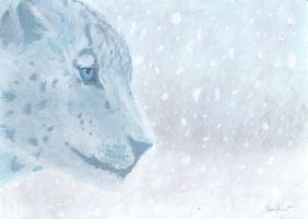 Snow Leopard by Debra-Marie