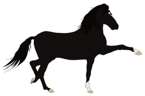 Andalusian Auction Horse 5 by HoofHaven