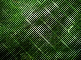 Slimy Green Grid Texture by sdwhaven