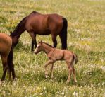 Horse Stock 5: Foal by HOTNStock
