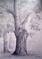 Tree sketch by Alekra81
