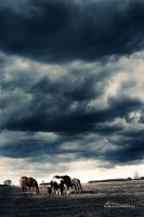 Horses in a Storm by ti-DESIGN