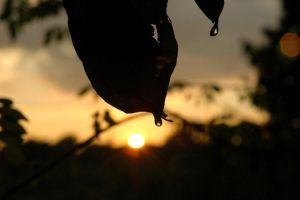 Silhouetted Drops by FayetteAethelwyne