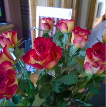 Really Pretty Roses by dragonfire70