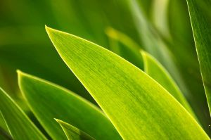 green by krista-perse