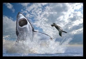 Breaching Great White by dustdevil
