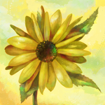 sunflower by Cortoony