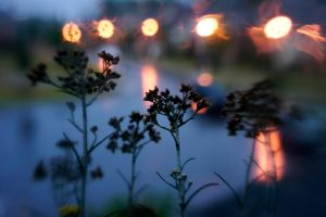 Plants And Rainy Bokeh by LDFranklin